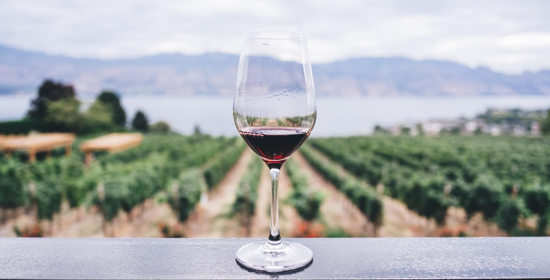 Copa de vino tinto en primer plano, mientras de fondo se ven los viñedos