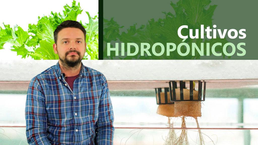 Curso de Sistemas Hidropónicos y Cultivos sin Suelo